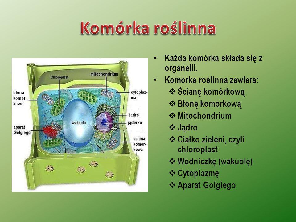 Komórka roślinna Każda komórka składa się z organelli.