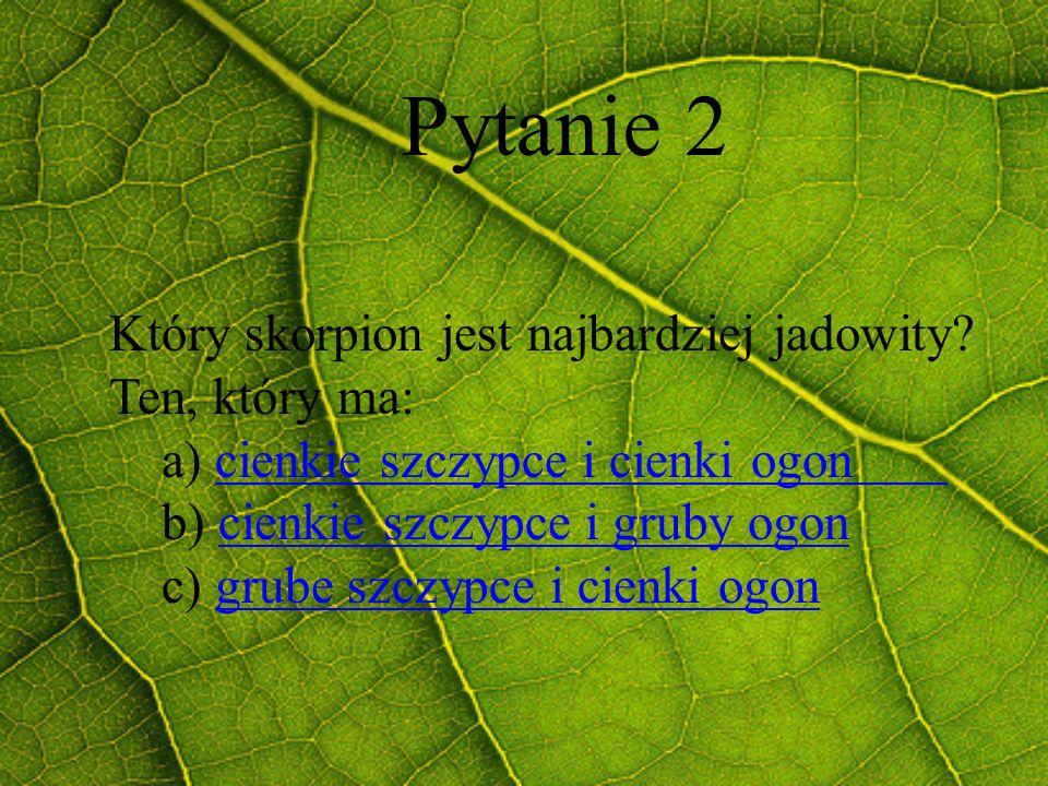 Pytanie 2 Który skorpion jest najbardziej jadowity Ten, który ma: