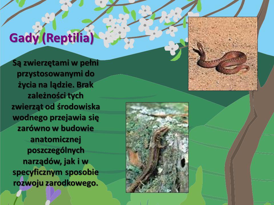 Gady (Reptilia)