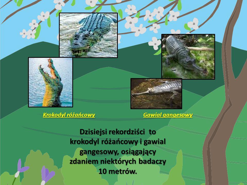 Krokodyl różańcowy Gawial gangesowy.