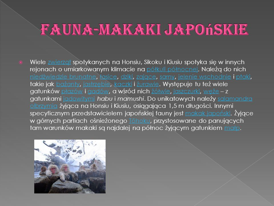 Fauna-Makaki japońskie