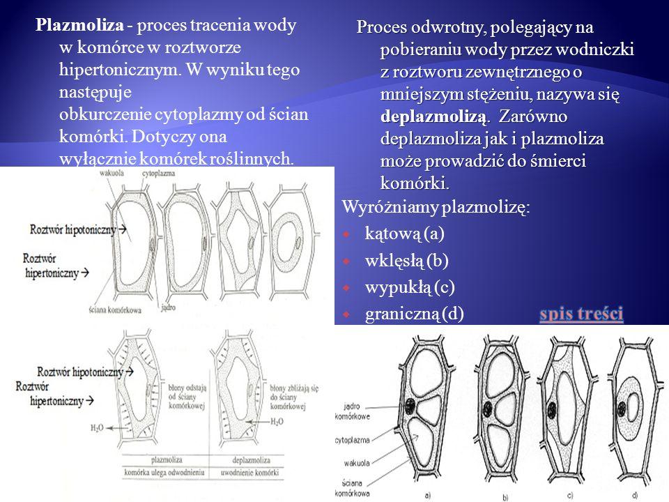 Proces odwrotny, polegający na pobieraniu wody przez wodniczki z roztworu zewnętrznego o mniejszym stężeniu, nazywa się deplazmolizą. Zarówno deplazmoliza jak i plazmoliza może prowadzić do śmierci komórki.