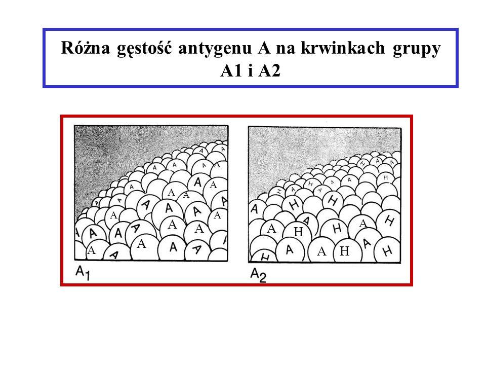 Różna gęstość antygenu A na krwinkach grupy A1 i A2