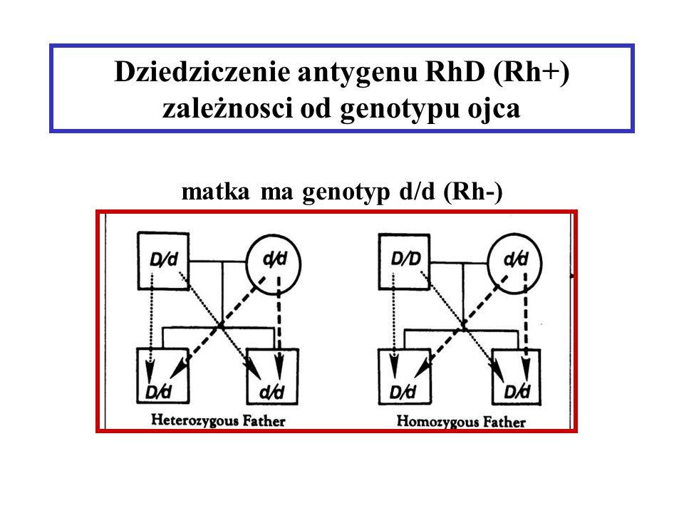 Dziedziczenie antygenu RhD (Rh+) zależnosci od genotypu ojca