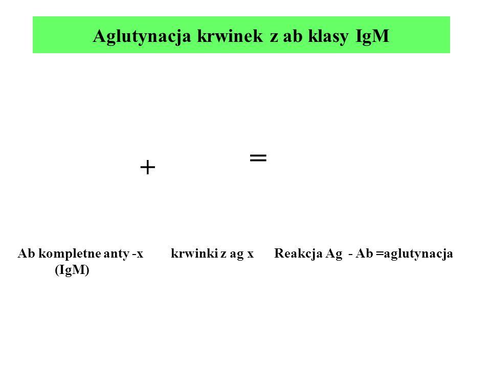 Aglutynacja krwinek z ab klasy IgM