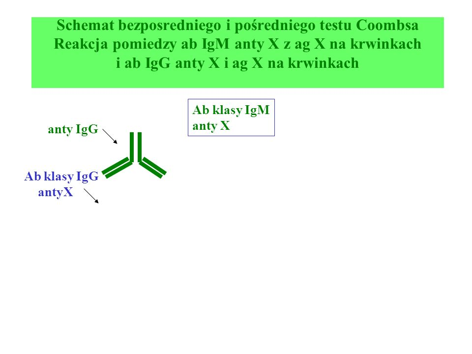 Schemat bezposredniego i pośredniego testu Coombsa Reakcja pomiedzy ab IgM anty X z ag X na krwinkach i ab IgG anty X i ag X na krwinkach