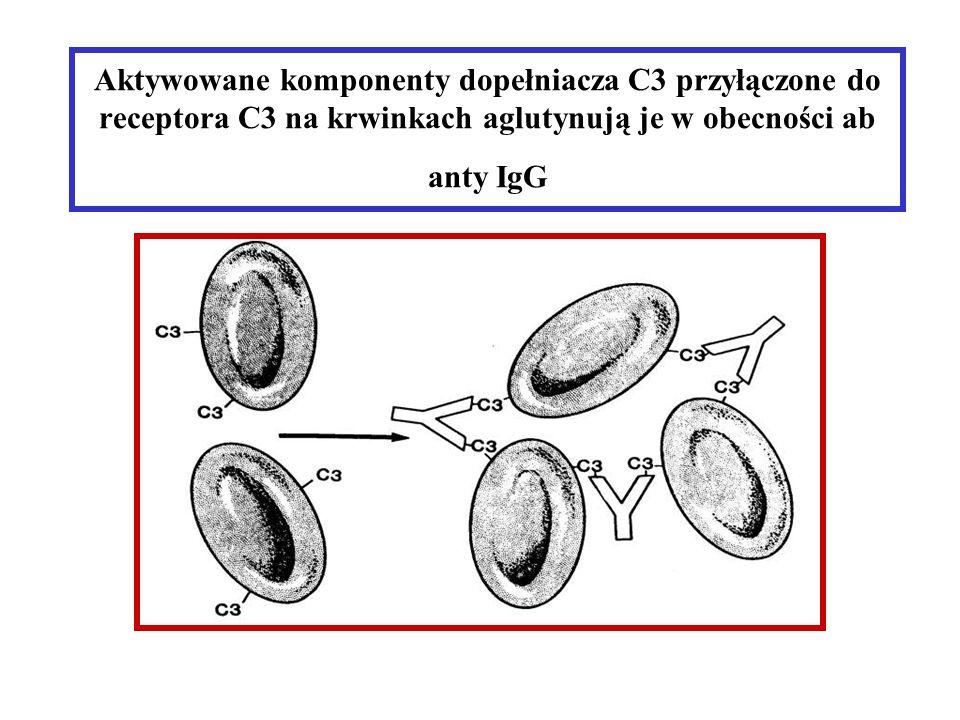 Aktywowane komponenty dopełniacza C3 przyłączone do receptora C3 na krwinkach aglutynują je w obecności ab anty IgG