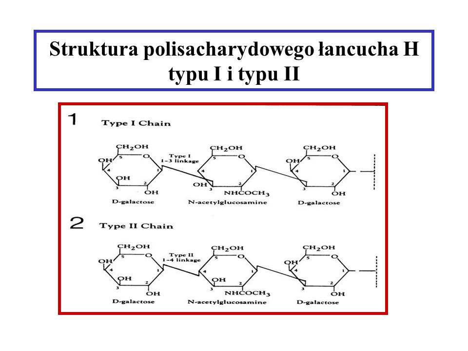 Struktura polisacharydowego łancucha H typu I i typu II