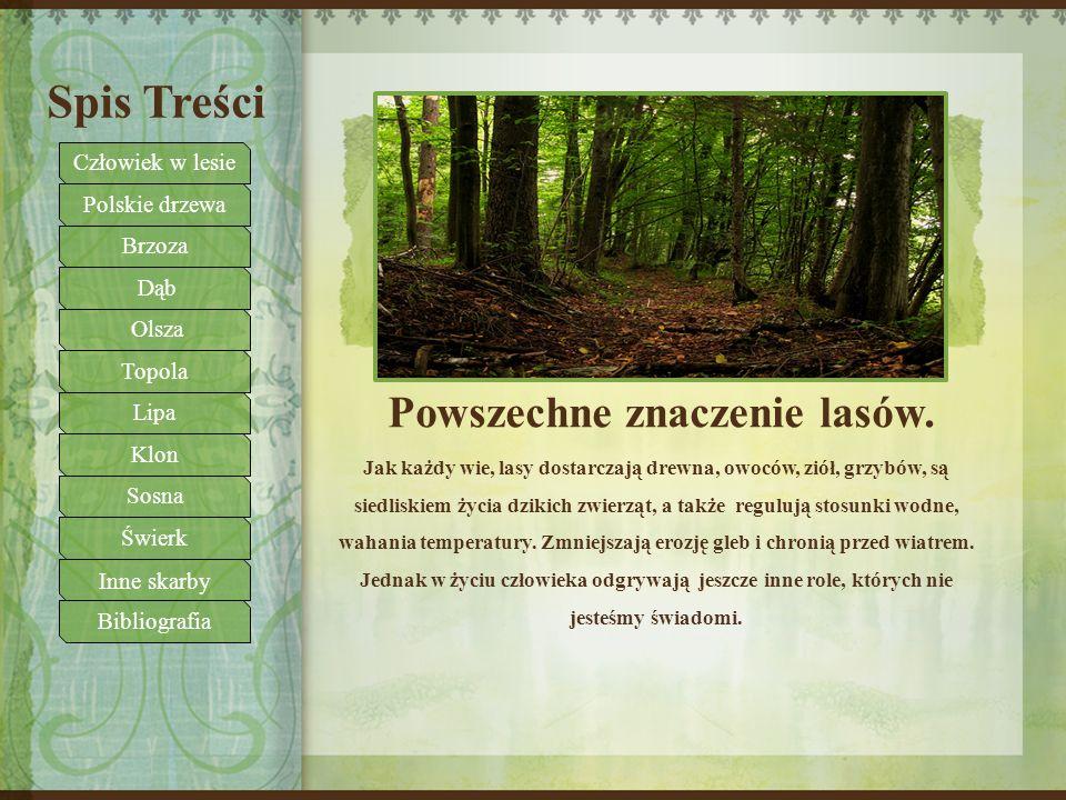 Powszechne znaczenie lasów.