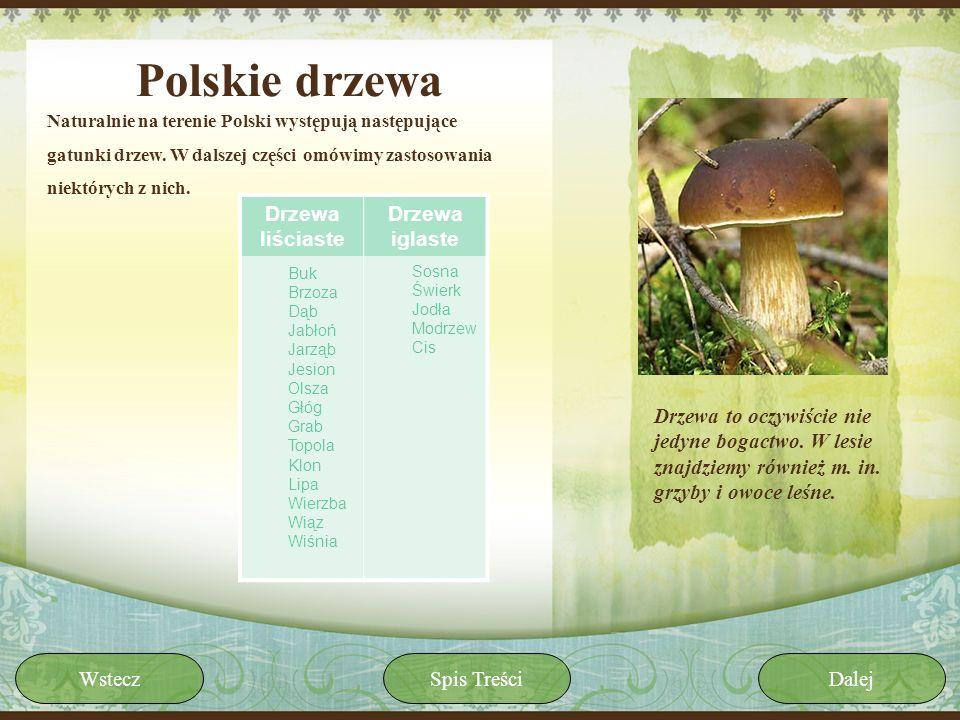 Polskie drzewa Drzewa liściaste Drzewa iglaste