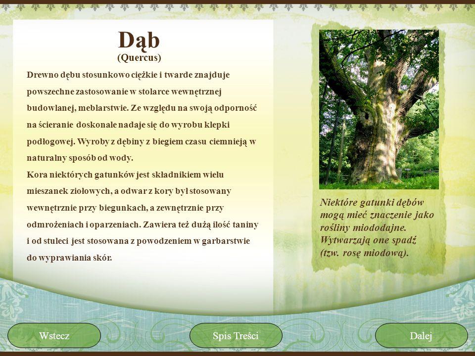 Dąb(Quercus)