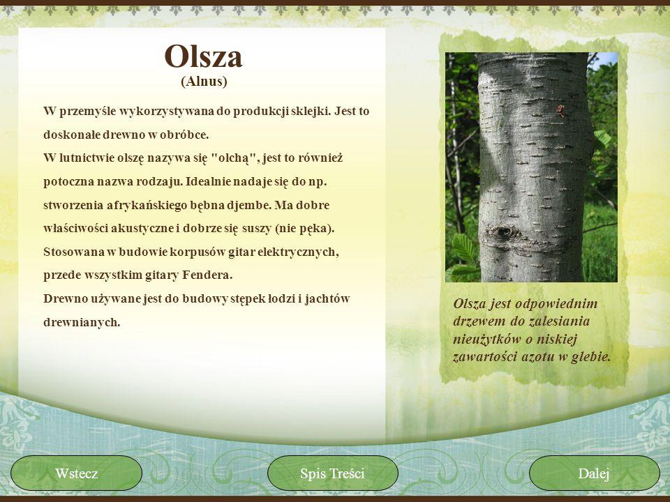 Olsza(Alnus) W przemyśle wykorzystywana do produkcji sklejki. Jest to doskonałe drewno w obróbce.