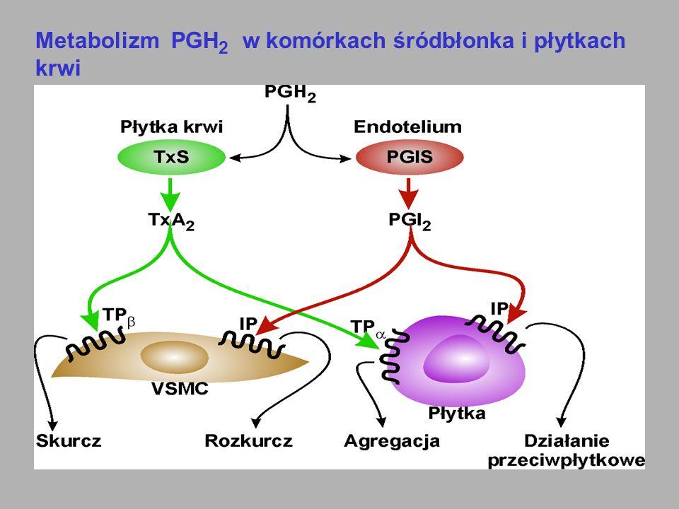 Metabolizm PGH2 w komórkach śródbłonka i płytkach krwi