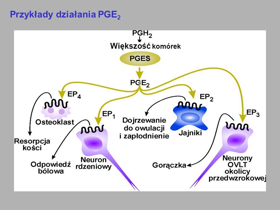 Przykłady działania PGE2