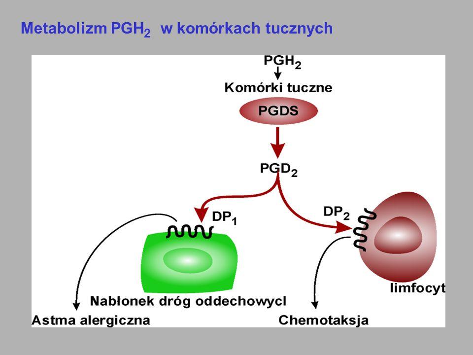 Metabolizm PGH2 w komórkach tucznych