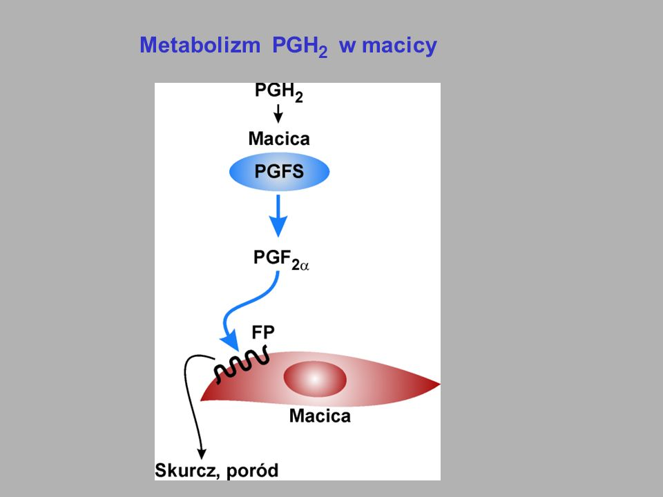 Metabolizm PGH2 w macicy