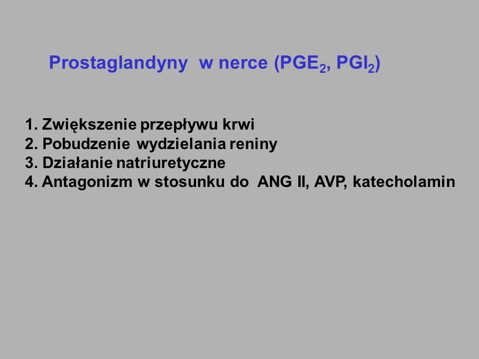 Prostaglandyny w nerce (PGE2, PGI2)