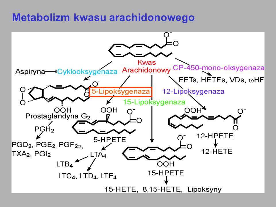 Metabolizm kwasu arachidonowego