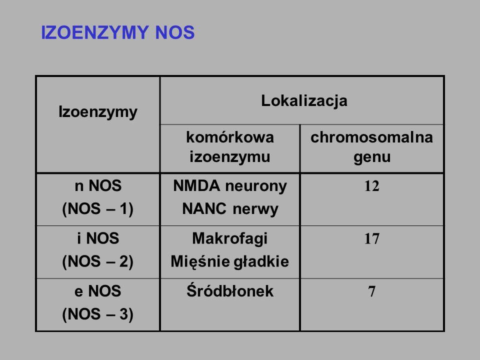 IZOENZYMY NOS Izoenzymy komórkowa izoenzymu chromosomalna genu n NOS