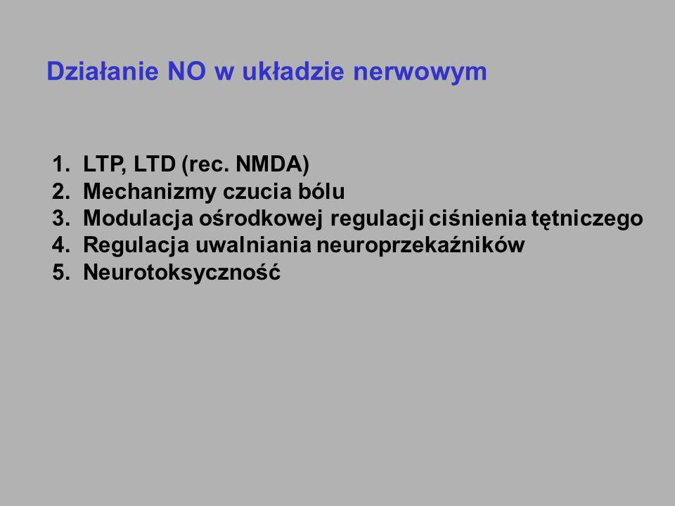 Działanie NO w układzie nerwowym