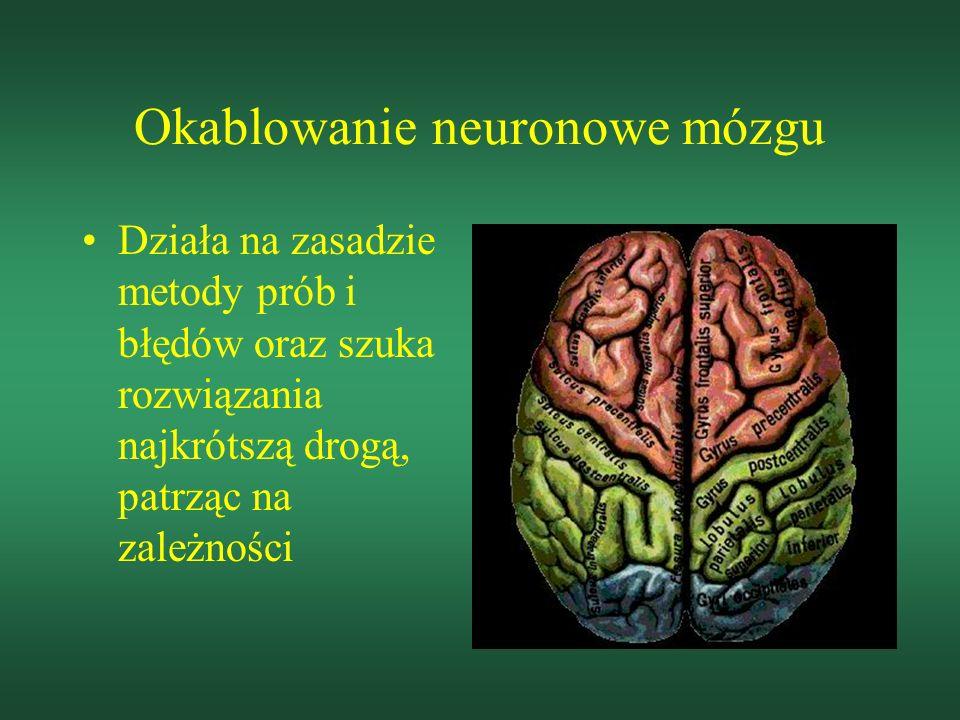 Okablowanie neuronowe mózgu