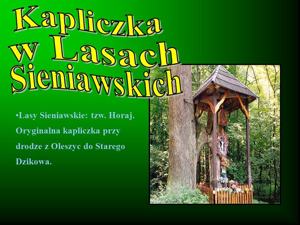 Kapliczka w Lasach Sieniawskich