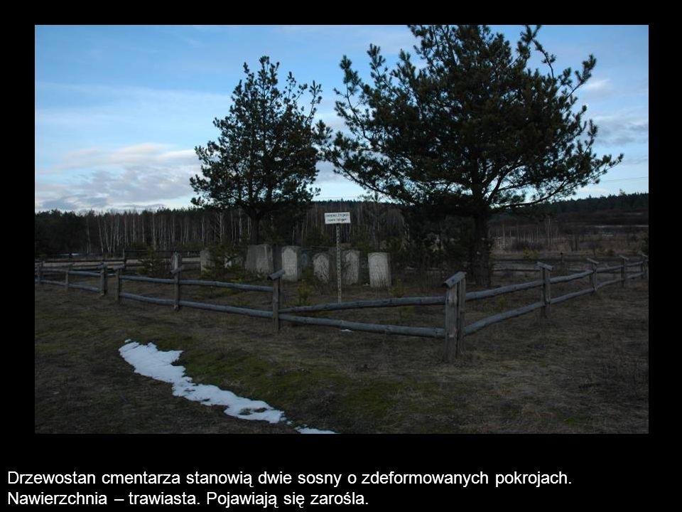 Drzewostan cmentarza stanowią dwie sosny o zdeformowanych pokrojach