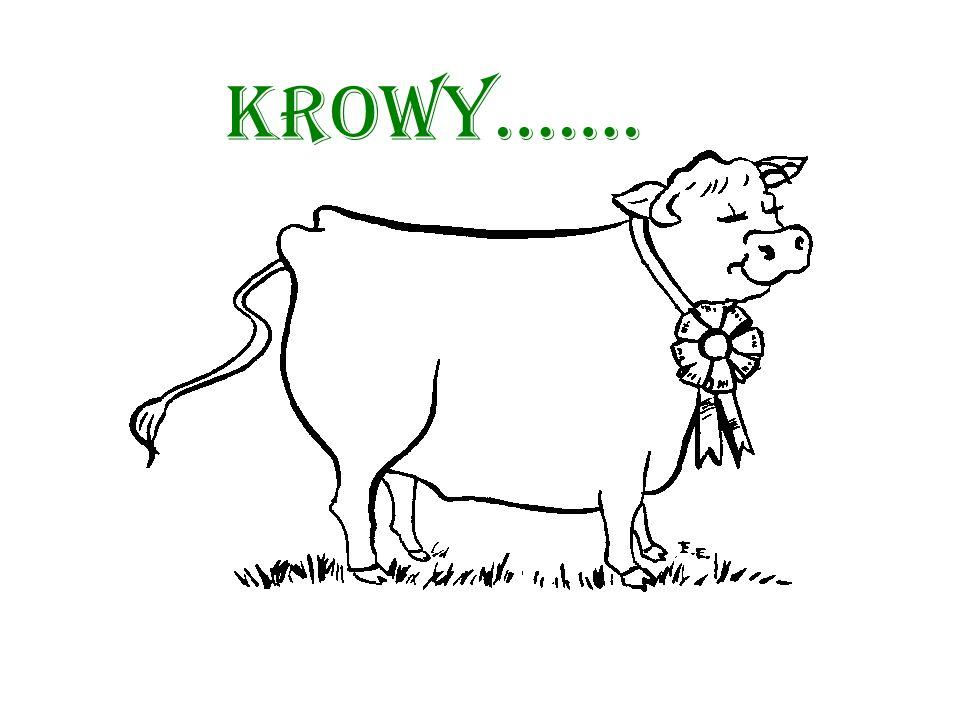 Krowy…….