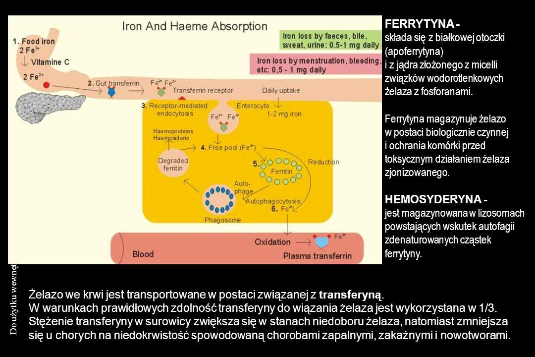 FERRYTYNA - składa się z białkowej otoczki (apoferrytyna) i z jądra złożonego z micelli związków wodorotlenkowych żelaza z fosforanami.