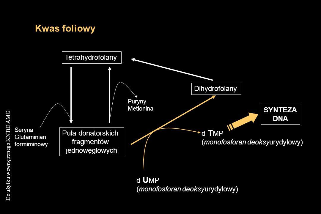 Kwas foliowy Tetrahydrofolany Dihydrofolany SYNTEZA DNA