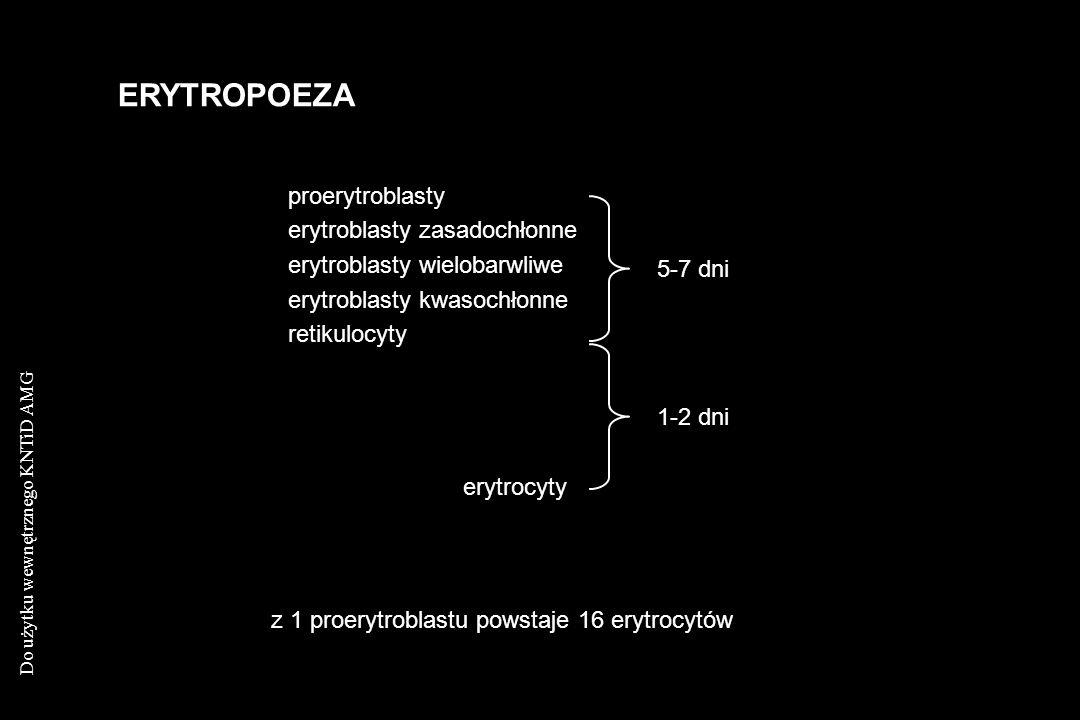 ERYTROPOEZA proerytroblasty erytroblasty zasadochłonne
