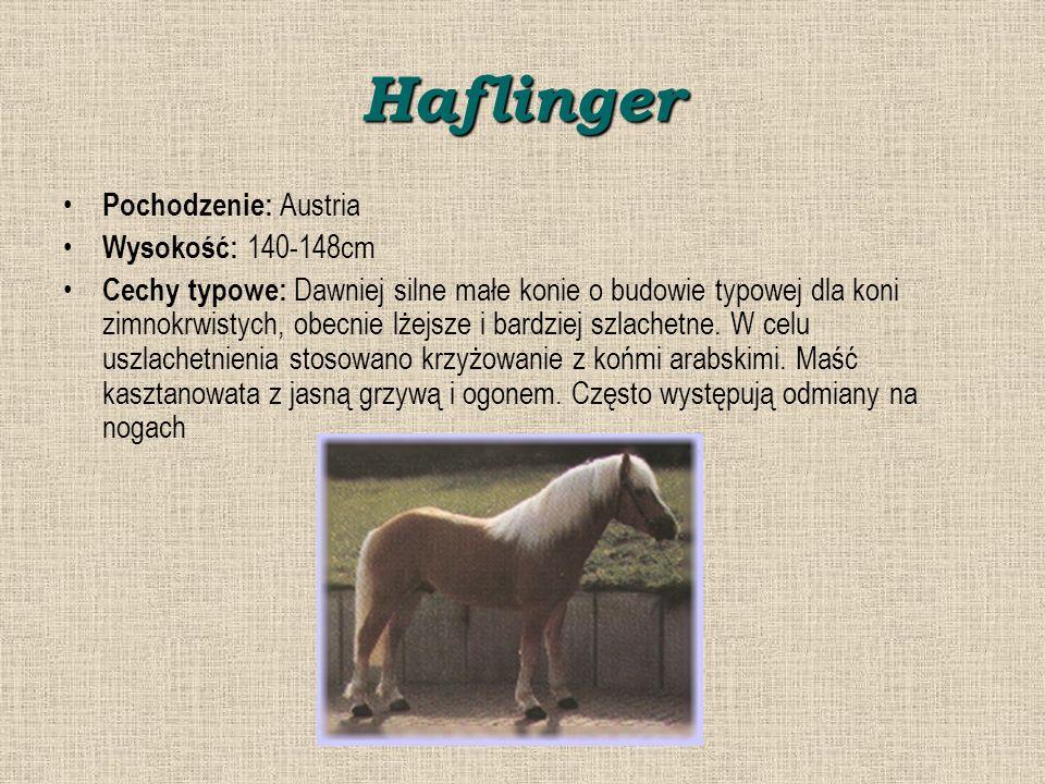 Haflinger Pochodzenie: Austria Wysokość: 140-148cm