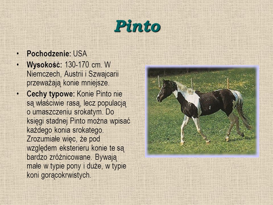 Pinto Pochodzenie: USA
