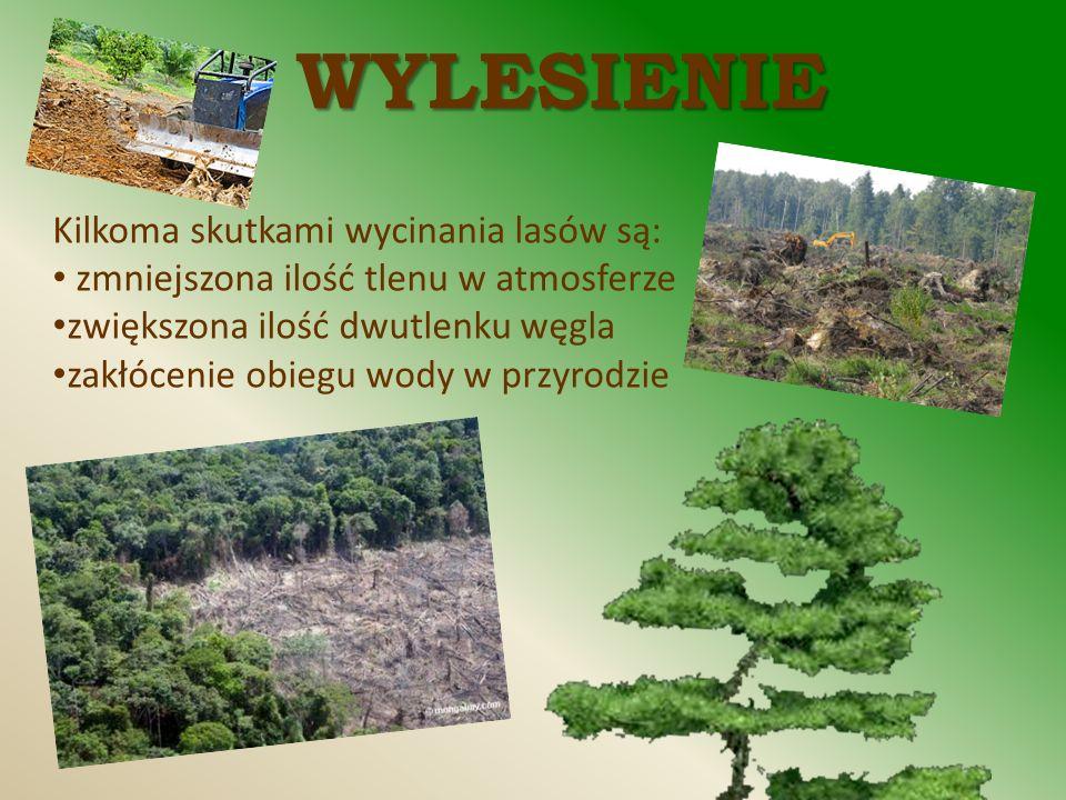 WYLESIENIE Kilkoma skutkami wycinania lasów są: