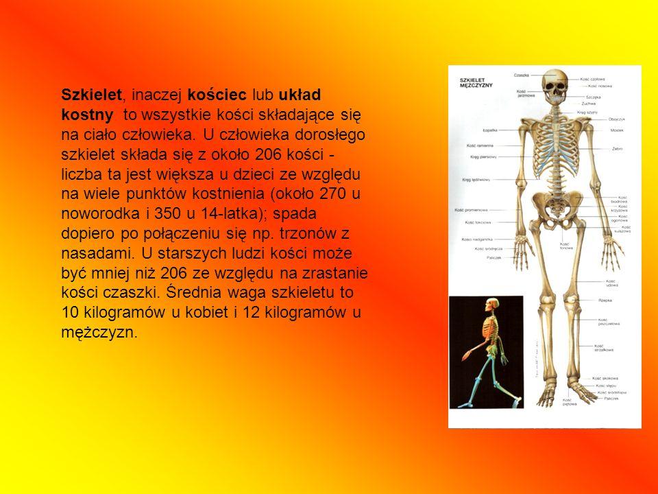 Szkielet, inaczej kościec lub układ kostny to wszystkie kości składające się na ciało człowieka.