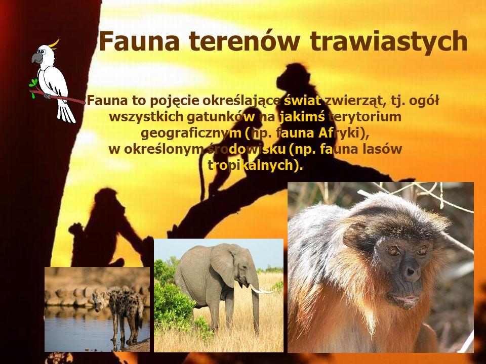 Fauna terenów trawiastych