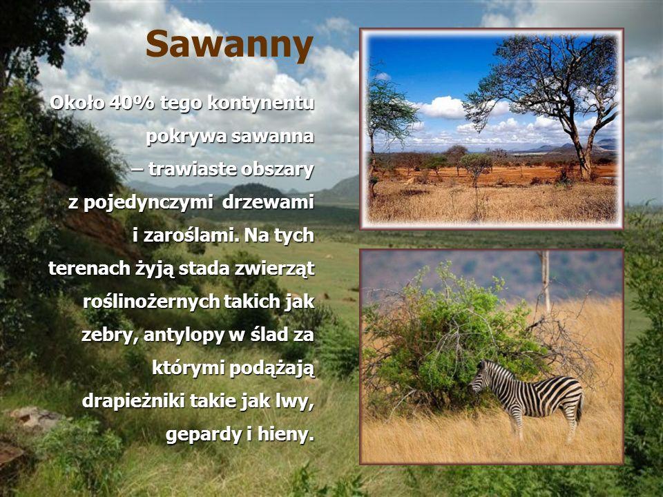Sawanny