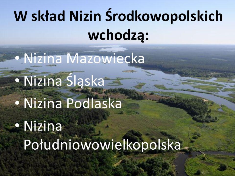W skład Nizin Środkowopolskich wchodzą: