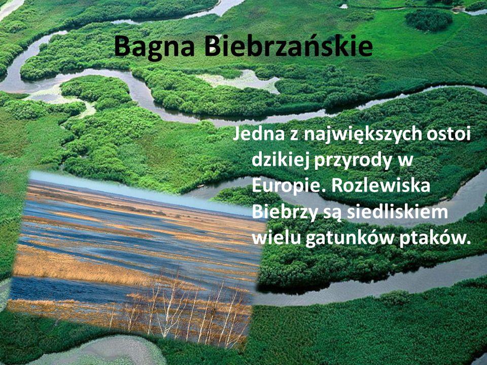 Bagna Biebrzańskie Jedna z największych ostoi dzikiej przyrody w Europie.