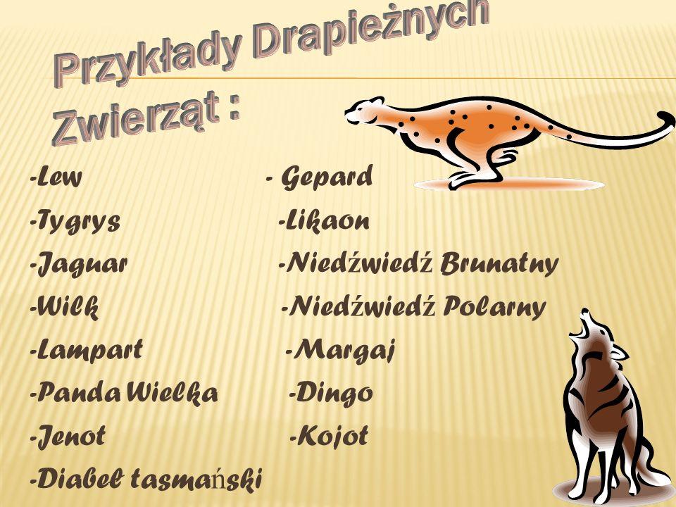 Przykłady Drapieżnych Zwierząt :