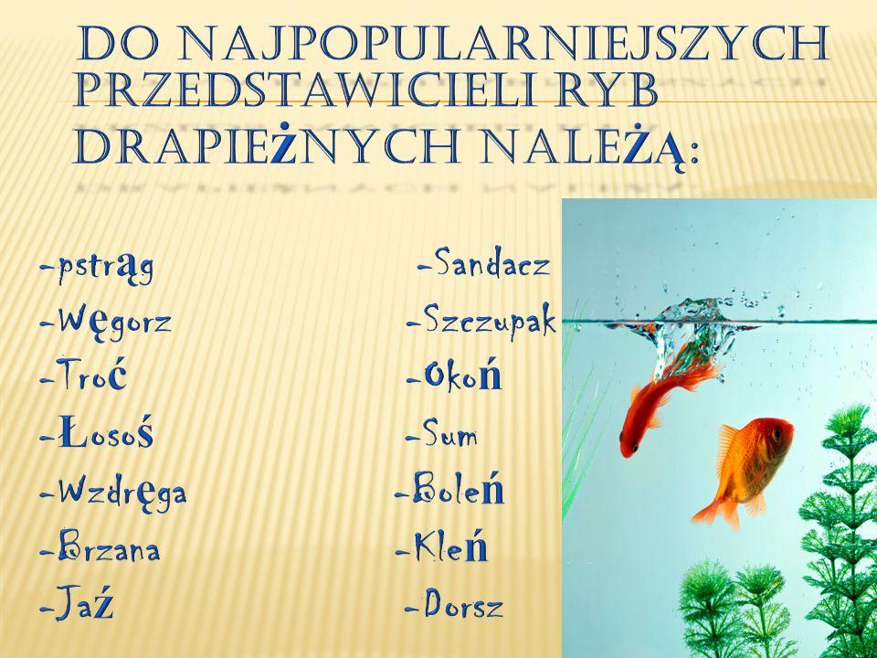 Do najpopularniejszych przedstawicieli ryb drapieżnych naleŻĄ: