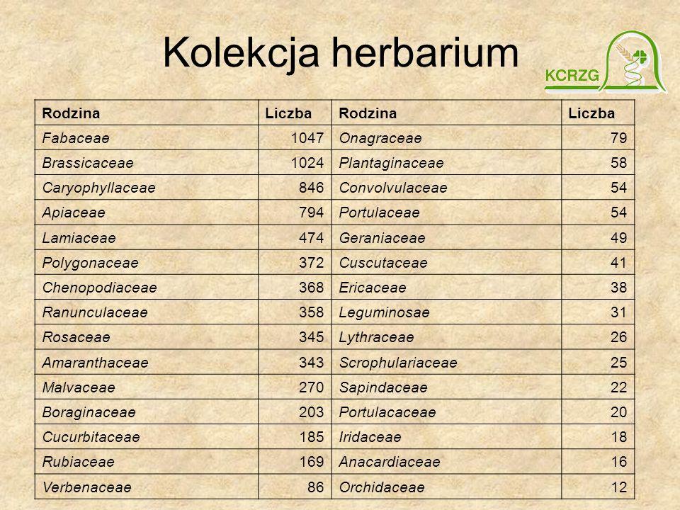 Kolekcja herbarium Rodzina Liczba Fabaceae 1047 Onagraceae 79