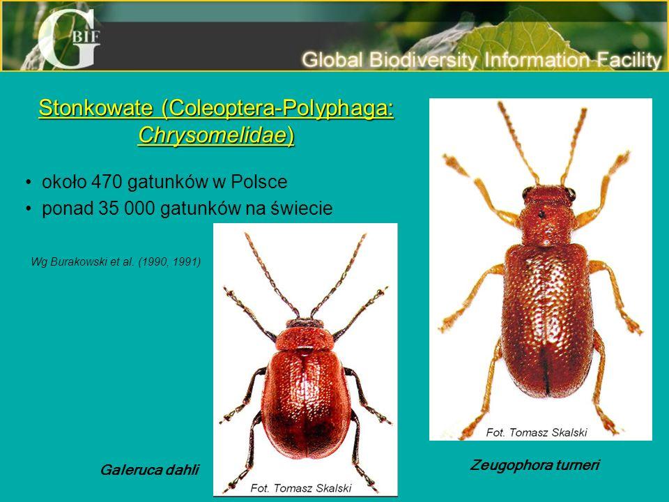 Stonkowate (Coleoptera-Polyphaga: Chrysomelidae)