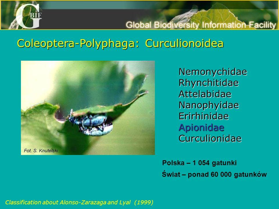 Coleoptera-Polyphaga: Curculionoidea