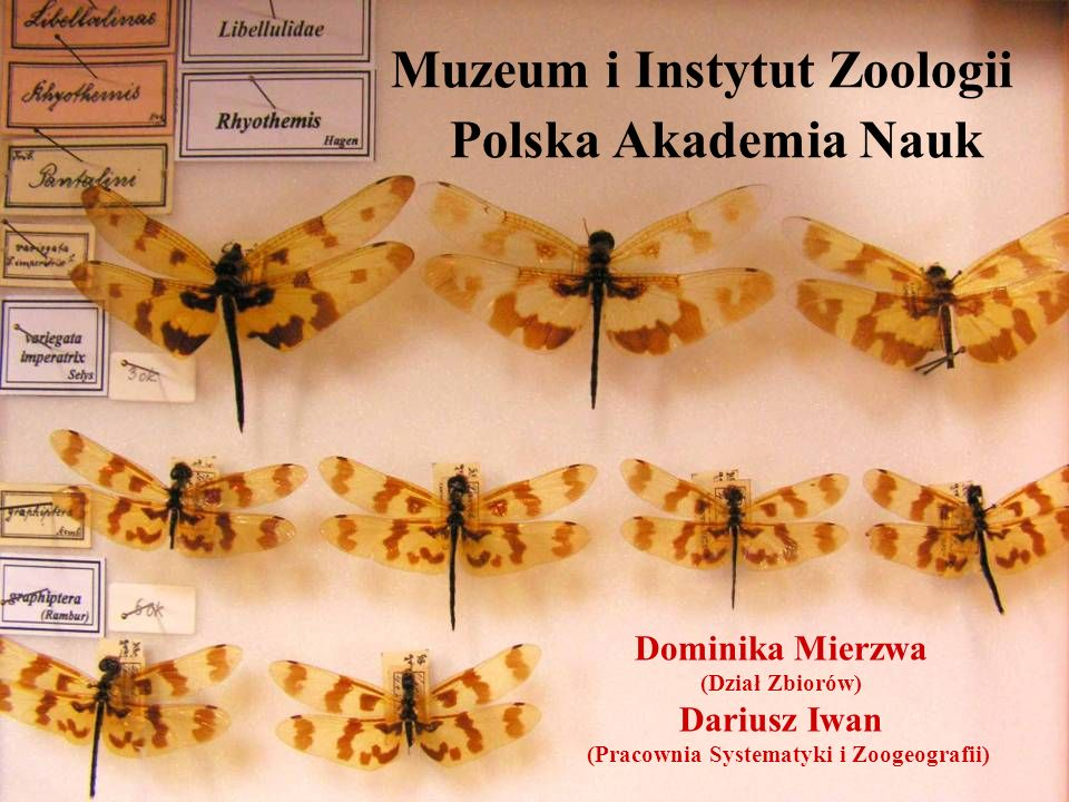Polska Akademia Nauk Muzeum i Instytut Zoologii Dominika Mierzwa