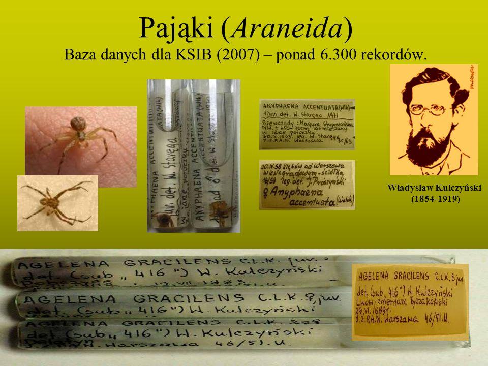 Pająki (Araneida) Baza danych dla KSIB (2007) – ponad 6.300 rekordów.