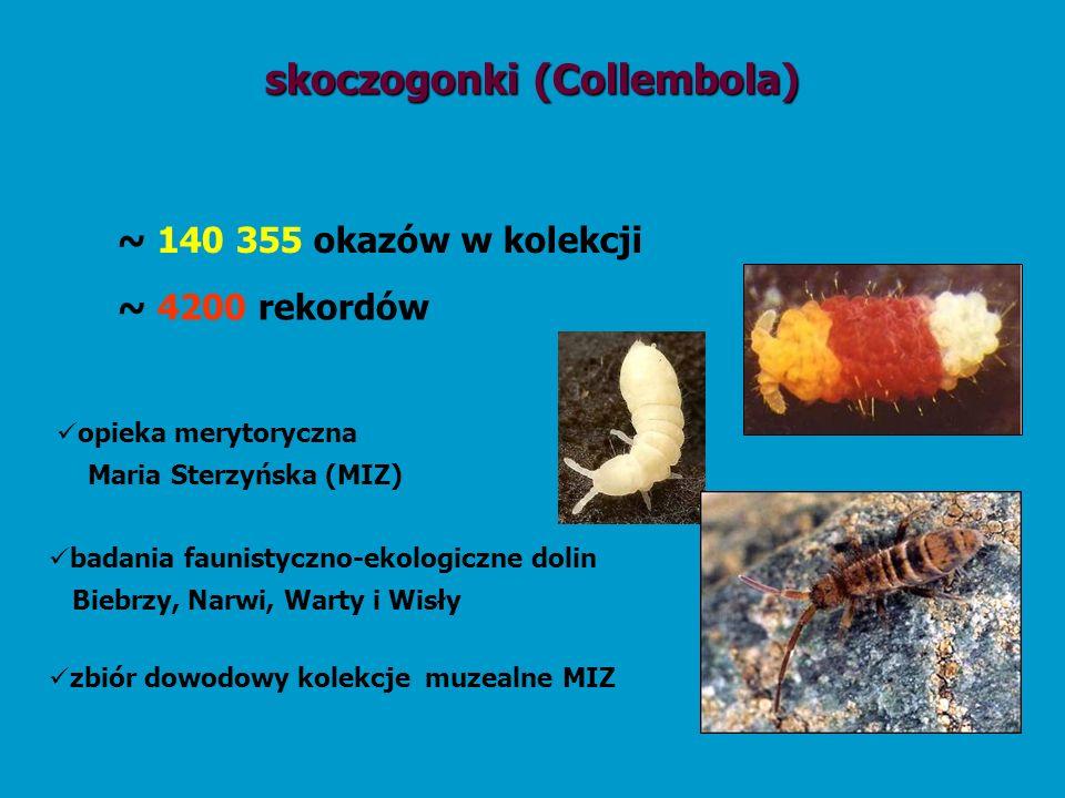 skoczogonki (Collembola)