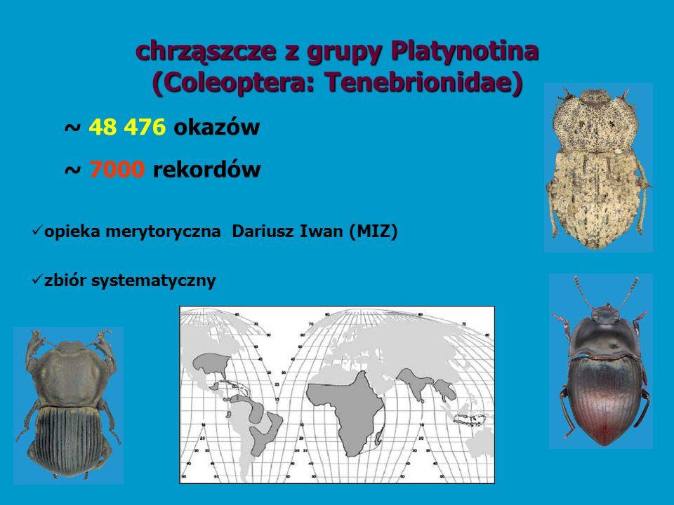 chrząszcze z grupy Platynotina (Coleoptera: Tenebrionidae)