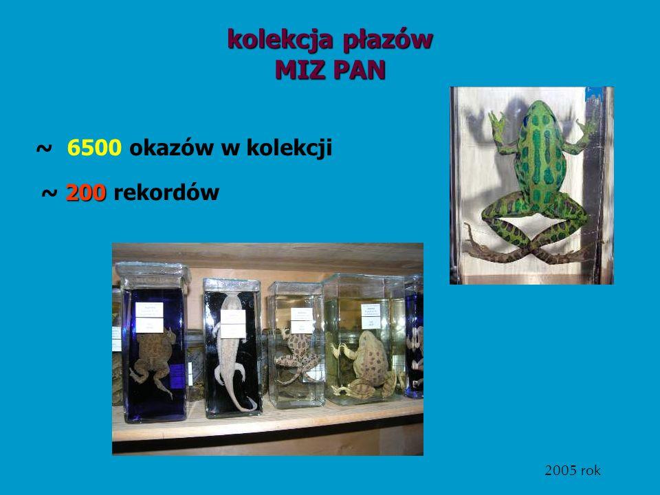 kolekcja płazów MIZ PAN
