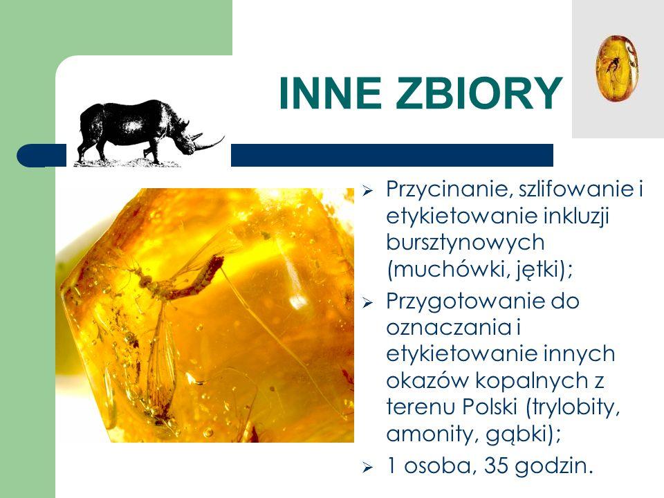 INNE ZBIORY Przycinanie, szlifowanie i etykietowanie inkluzji bursztynowych (muchówki, jętki);
